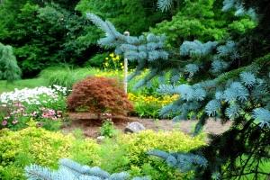 Friendship Garden Summer 5
