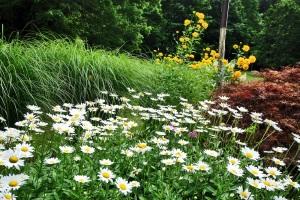 Friendship Garden Summer 6