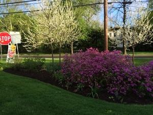 triangle planting